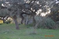 Dolmen de Hermosilla